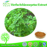 Nepeta Extract, Nepeta Extract Powder, Natural Nepeta Extract 10:1