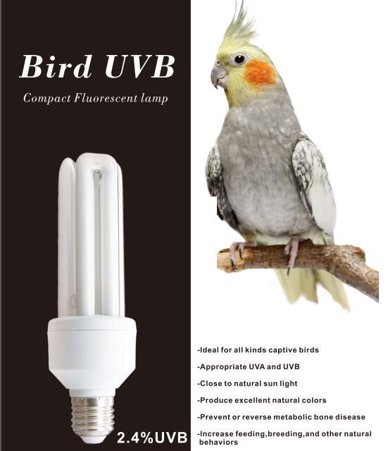 Oiseau UVB 2.0 lampe compacte bonne captif perroquet fixe pour cage à oiseaux