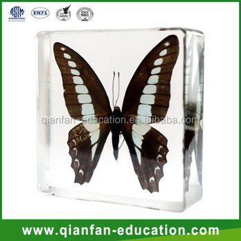 Butterfly embedded specimen resin crafts materials for kids real insect