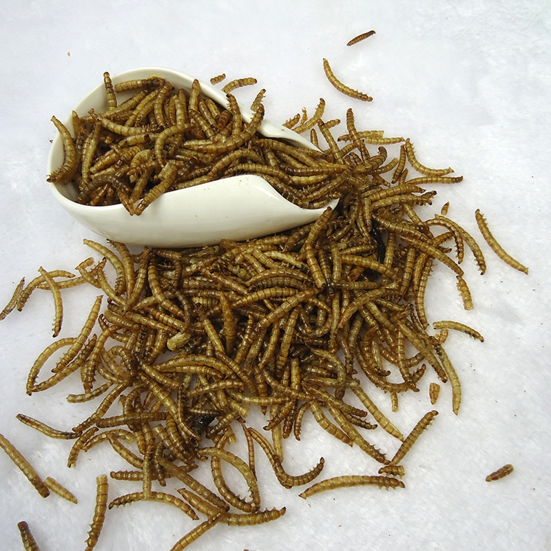 Dried Mealworm Feed Additive For Animal