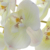 Silk Butterfly Orchids Plant Real Touch White Phalaenopsis Orchid For Wedding Decoration