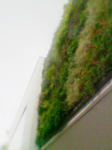 Vertical Garden or Green Wall Solution