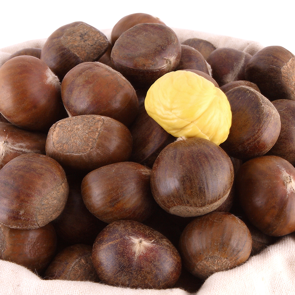 High Quality hebei xinglong chestnut for sale