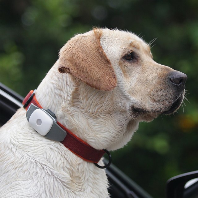 Waterproof Global gps tracker <strong>device</strong> for dog child aged pet kids small GPS pet tracker for dogs cats