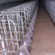 Pig Farming Equipment Stall Pig Gestation Crates For Sale