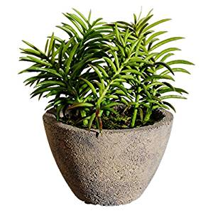 "8"" Succulent Artificial Plant w/Cement Pot -Green (pack of 4)"