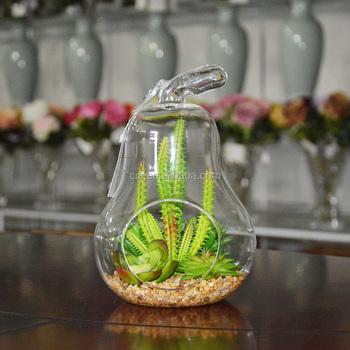 Indoor Flowering Cactus Succulent Glass Terrarium Vase Bonsai For