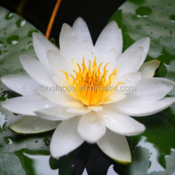 Wan Lian Chinese New Lotus Flower Seeds