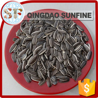Edible sunflower seeds in shell