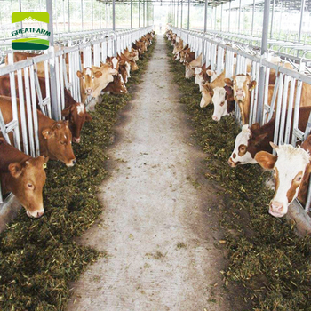 GREAT FARM Modern Design Cattle Farm Construction Cow Building Equipment