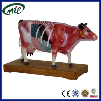 Veterinarians Cattle Cow Bovine Acupuncture Modelmedical