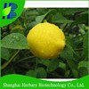 2018 High germination hybrid Lemon seeds for cultivating
