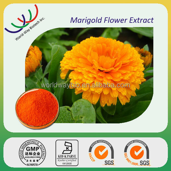 China manufacturer sales natural herbs high quality lutein 98% tagetes erecta l extract