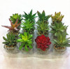 /product-detail/home-decorative-artificial-mixed-mini-succulent-plant-pvc-potted-succulent-plant-with-different-styles-60102477731.html