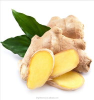 High Quality Chinese fresh Mature Ginger / Yellow Ginger / Dry Ginger