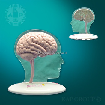 High-quality Silicone Medical Fake Human Brain Model /artificial 3d Human  Full Size Cerebral Model Anatomical Human Brain Model - Buy Medical  Cerebral
