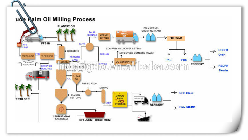 bleaching of crude palm oil Processing palm oil for commercial use almost always involves physical refining ( acid modification, bleaching and deacidification)  alfa laval provides a range  of different equipment often used in crude palm oil (cpo) mills for removing the.