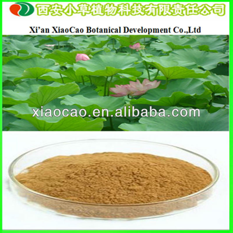 Manufacturer Supply High Quality Lotus Leaf Plant Extract/Lotus Leaf Extract 10% Nuciferine