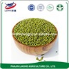 Nutritious Healthy Food Size 3.2-4.0mm AD Drying Process and Urad Beans Type Green Mung Bean Green Gram