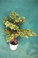Home garden decoration 50cm to 160 cm hight small indoor canadian artificial green pot plastic similar pine trees ELSPZ02 0904