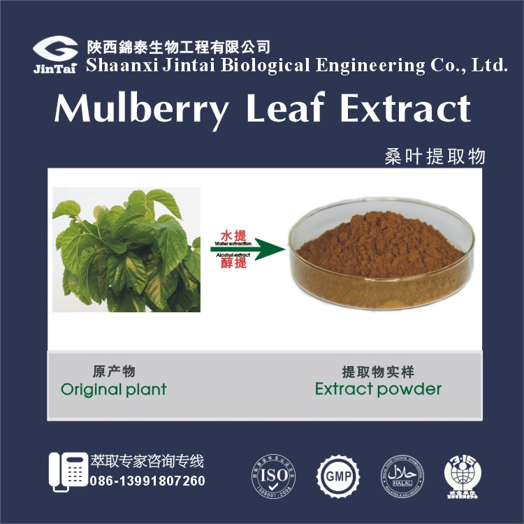 top quality mulberry leaf extract preventing high blood pressure