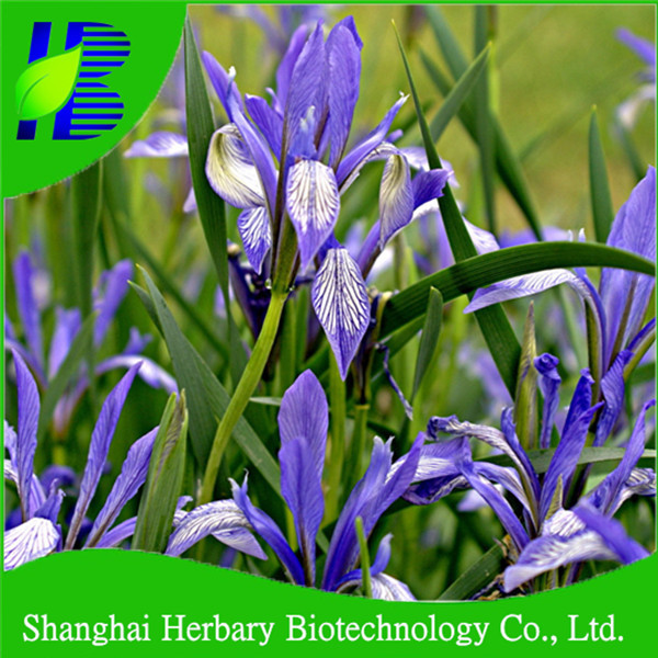 Hybrid flower seeds orchid seeds for sale