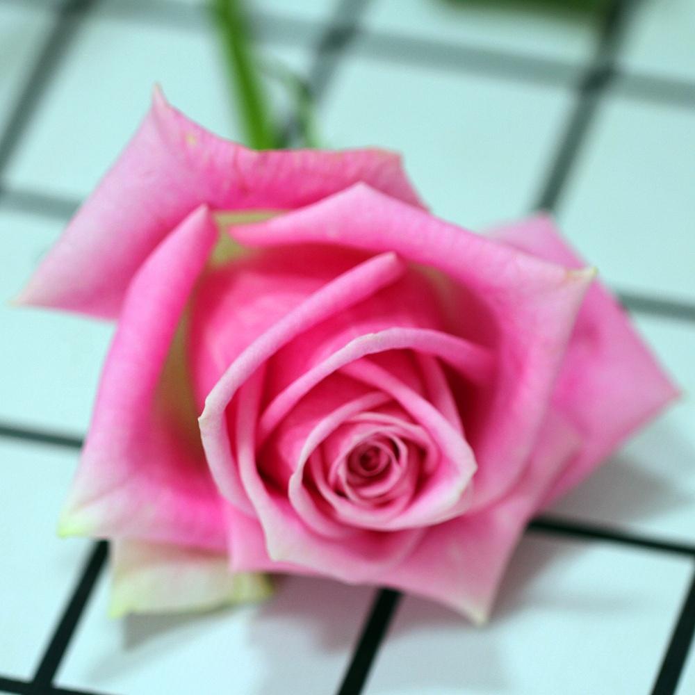 Valentine S Day Gift Fresh Cut Rose Carnation Eustoma Flowers Natural Fresh Cut Rose Fast Delivery From China Buy Valentine S Day Gift Fresh Cut