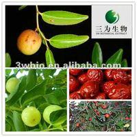 Pure Natural Plant Extract Powder Ziziphus jujuba Extract