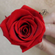 Wholesale best quality preserved red roses for arrangement conference hall