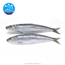 Frozen Sardine Fish Sea Fish Food For bait