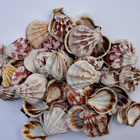 2019 New Design Natural Products Craft Seashells