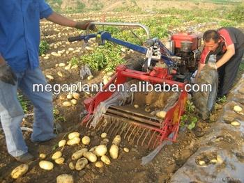 Patata dolce raccolto carota di patate raccolta macchina for Raccolta patate