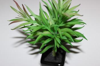 Succulent Plants Tropical Plants Real Touch Artificial Grass Plant Mini Succulent Plants Bonsai