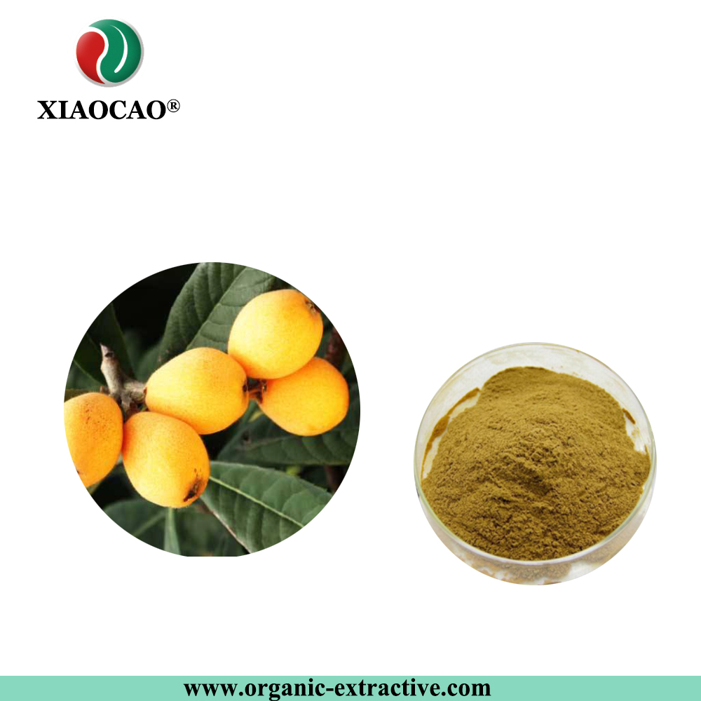 Top Standard Loquat Leaf Extract Powder Competitive Price