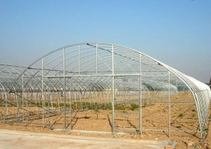 The commercial cheapest Solar Agriculture Greenhouse with Benches system and Hydroponics