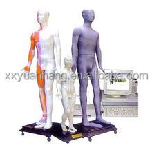 Human Keying massage acupuncture model in medical student learning / electronic mannequin