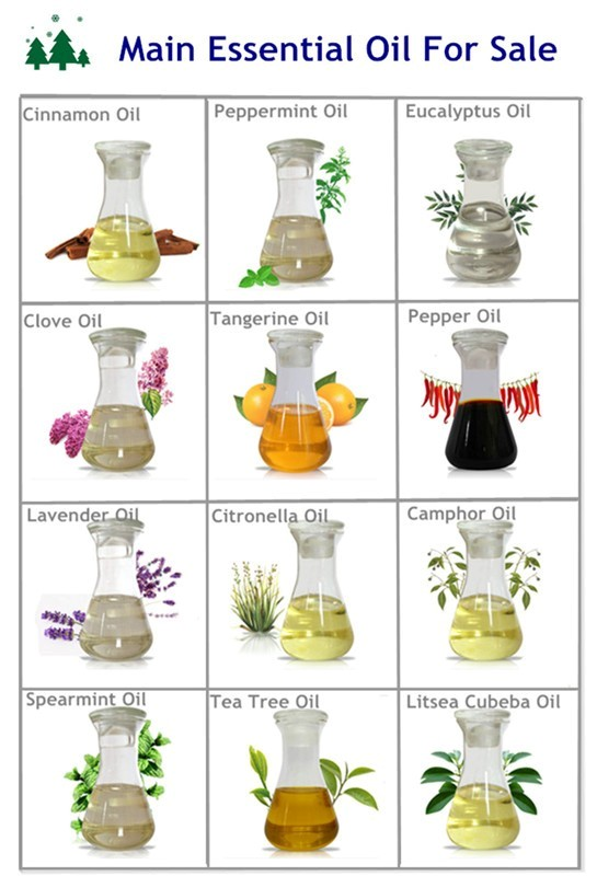 Best Seller Hot Sale Organic Fragrance Oil Clove Essential Oil