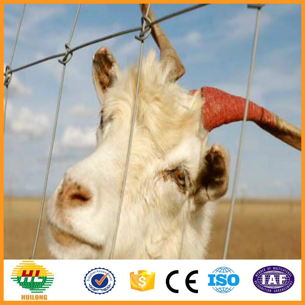 China manufacturer cheap goat and sheep fence( OEM&ODM )