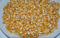 Cheap Price Yellow Corn /White Corn /maize For Sale