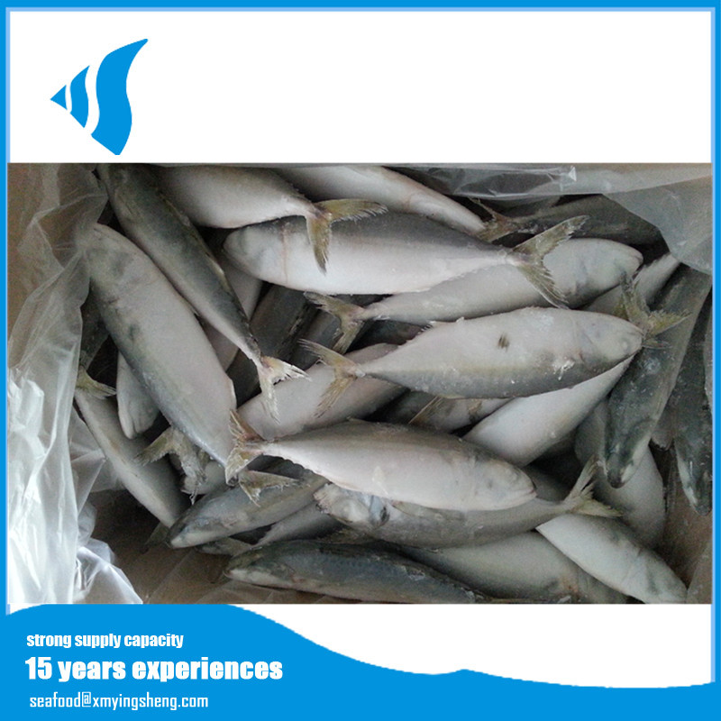HQ New Frozen Fresh Oceanic Indian Mackerel Fish For Foreign Clients