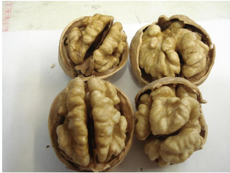 Chinese hot sale for walnut with good quality