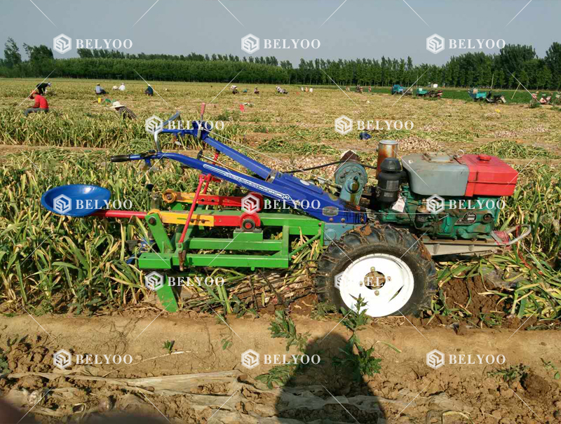 Tractor Mounted Harvester Small Garlic Harvester Ajos Garlic Harvesting Machines
