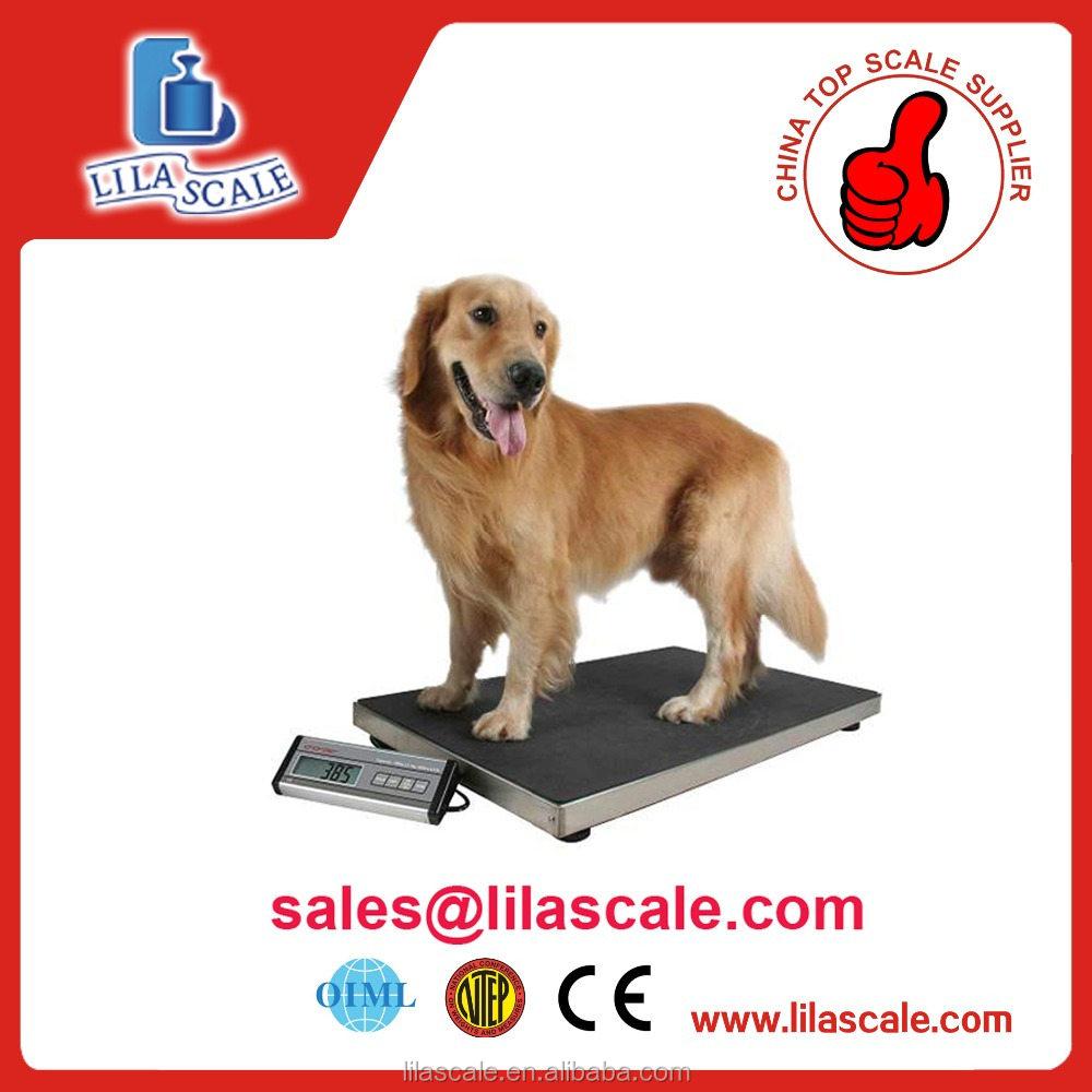 DOG SCALE