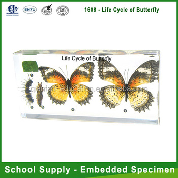 Qianfan Life Cycle of Butterfly Labs Educational Embedded Specimen