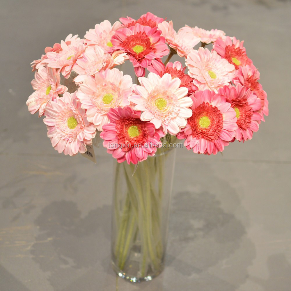gerbera plants gerbera plants suppliers and manufacturers at