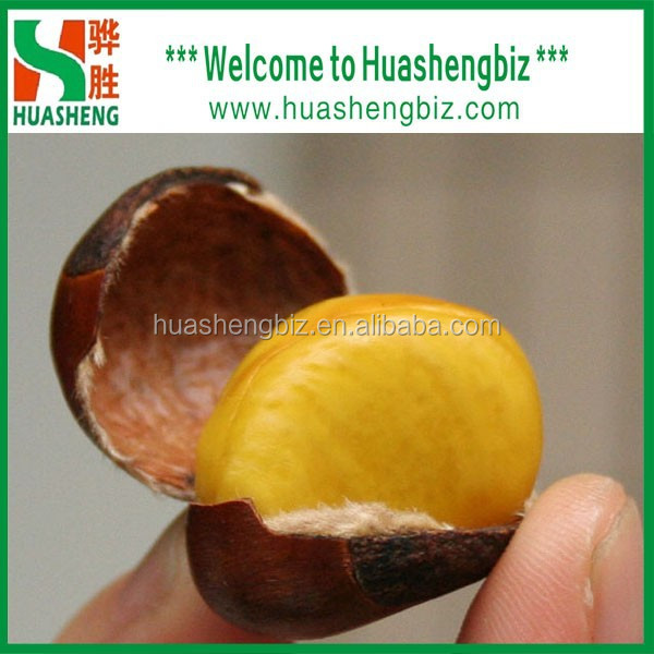 Hot Selling fresh chestnuts - Organic and best Chinese chestnuts