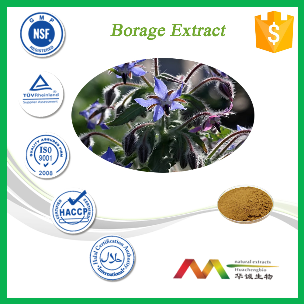High Quality Product Borage Extract/Borage Extract Powder