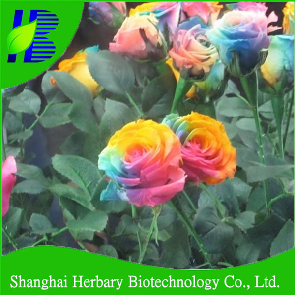 Rainbow roses seeds images galleries for Buy rainbow rose seeds