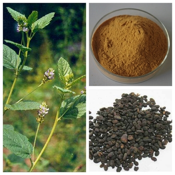 China Factory Low Price Psoralea Corylifolia Extract/ Bakuchiol 60%-90% - Buy China Bakuchiol,Low Price Psoralea Corylifolia Extract,China Factory Psoralea Corylifolia Seed Extract Product on Alibaba.com