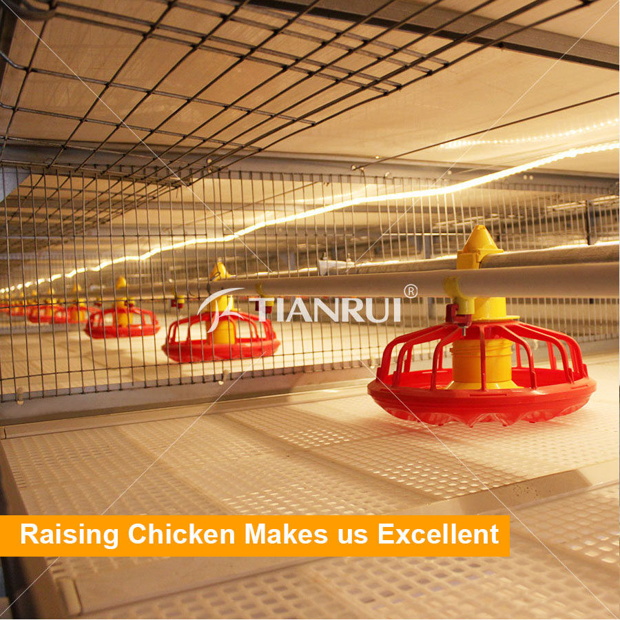 Reasonable Price Broiler Chicks Rate For Poultry Farm Equipment